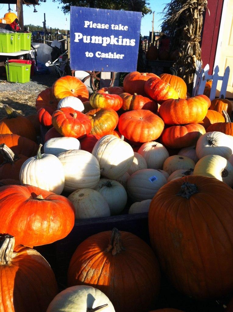 pumpkinpile_coxfarms